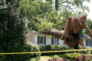 What to do if a Tree Falls on Your House | Cox Roofing